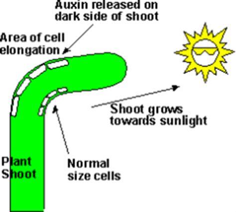 Ap biology plant essay questions answers