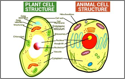 Ap biology plant essay questions answers